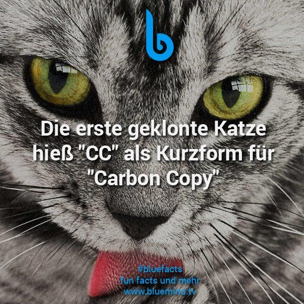 Katzen Fakt 10