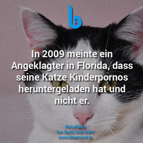 Katzen Fakt 9